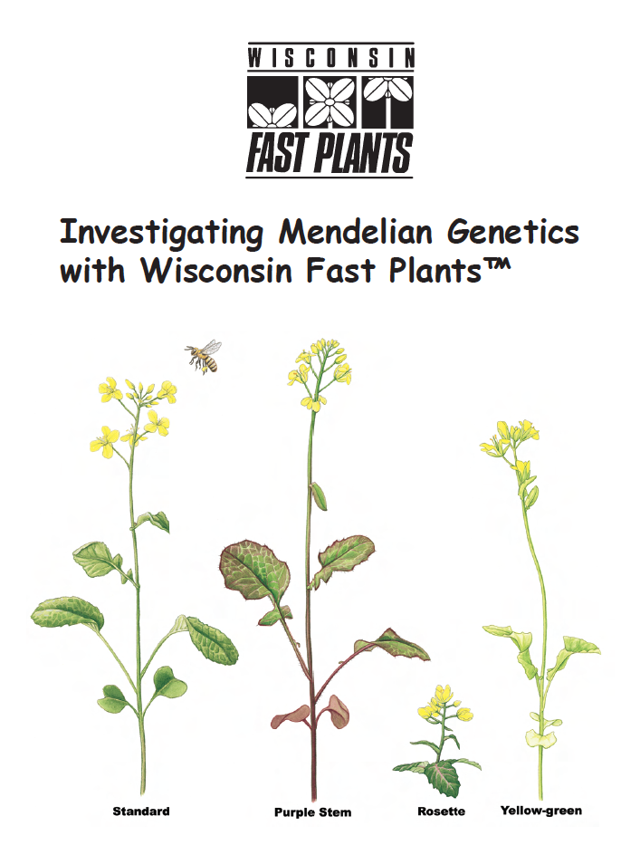 fast plants lab report Report abuse transcript of fast plant lab observance of artificial selection: technical study of wisconsin fast plants fast plant lab background of evolution.