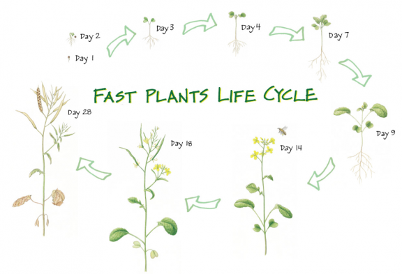 Wisconsin Fast Plants Activity And Resource Portal Screenshot Display