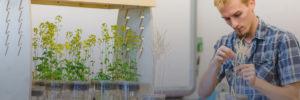 grow-fast-plants