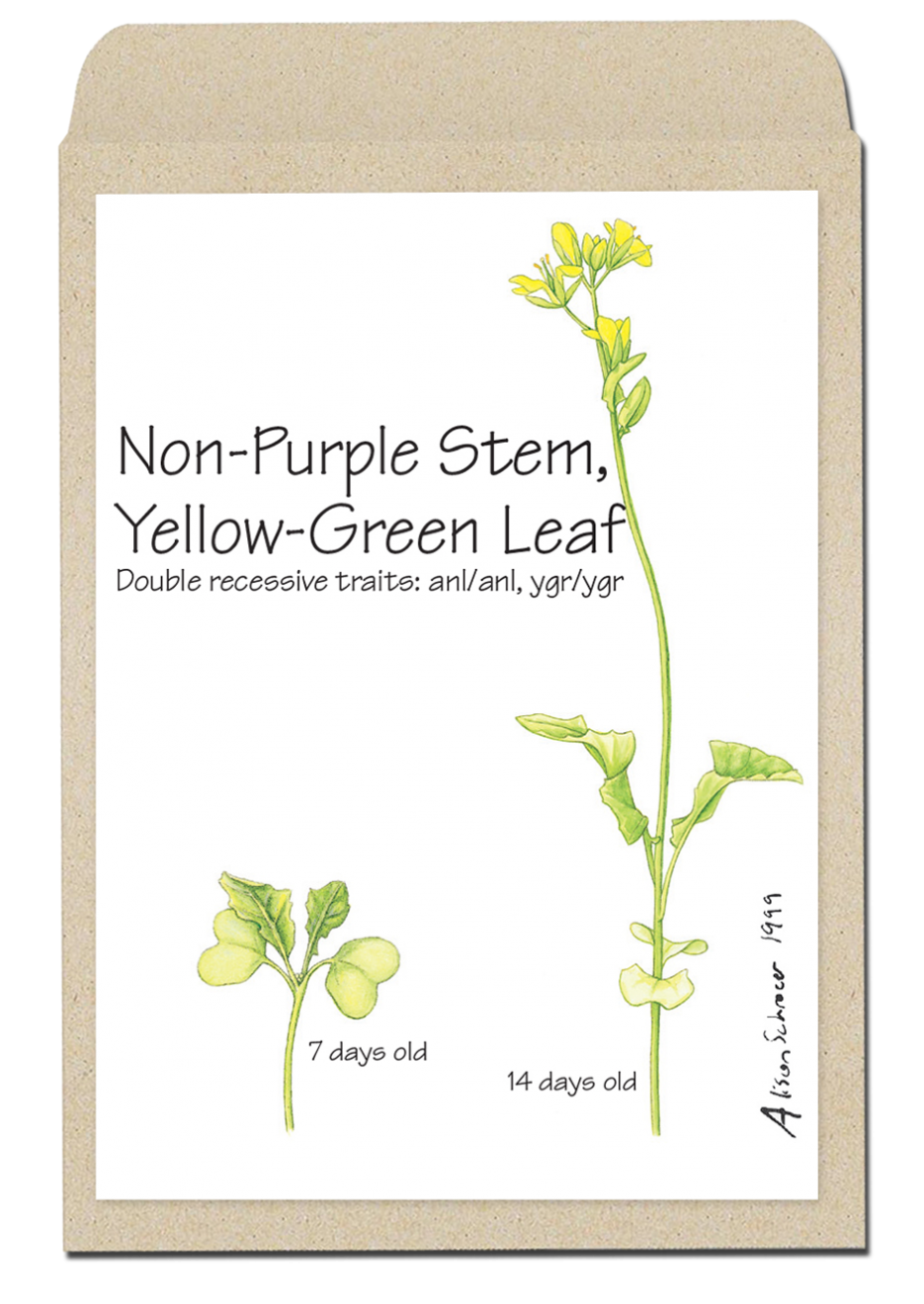 nonpurplestemyellowgreenleaf