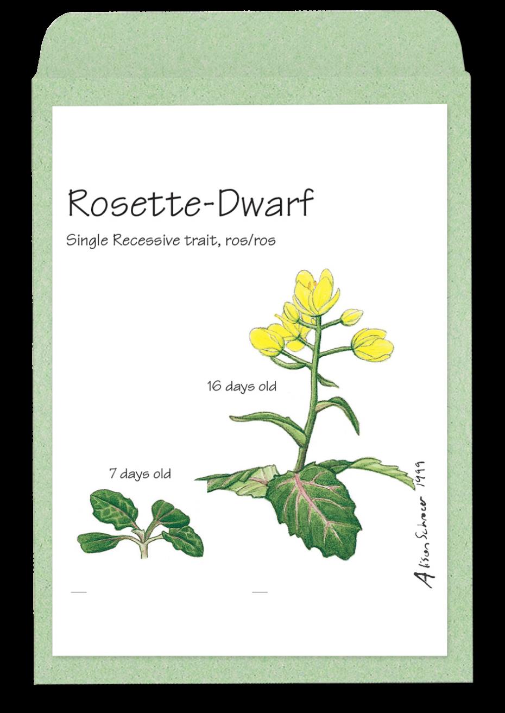 rosettedwarf