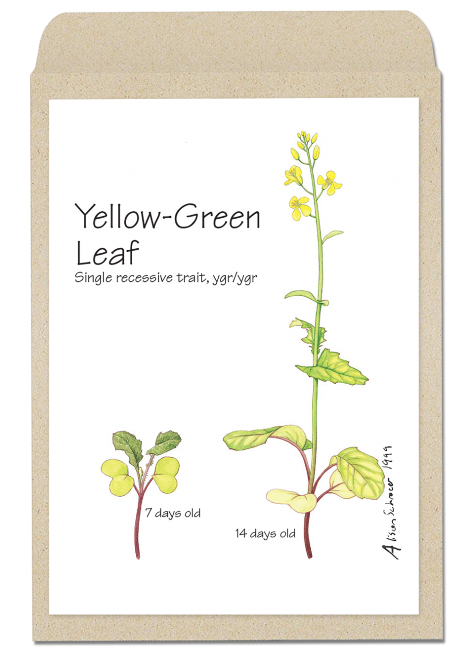 yellowleaf