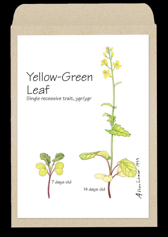 yellowleaf