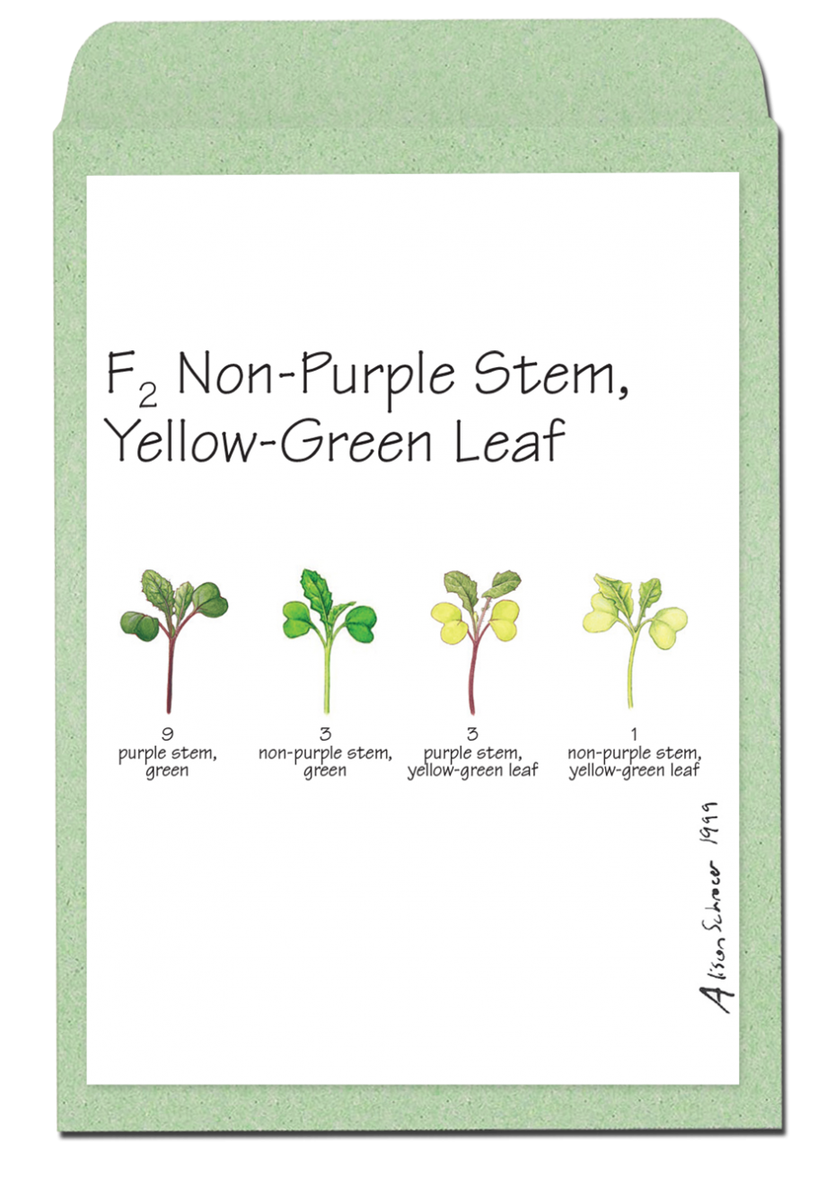 f2nonpurplestemyellowgreenleaf