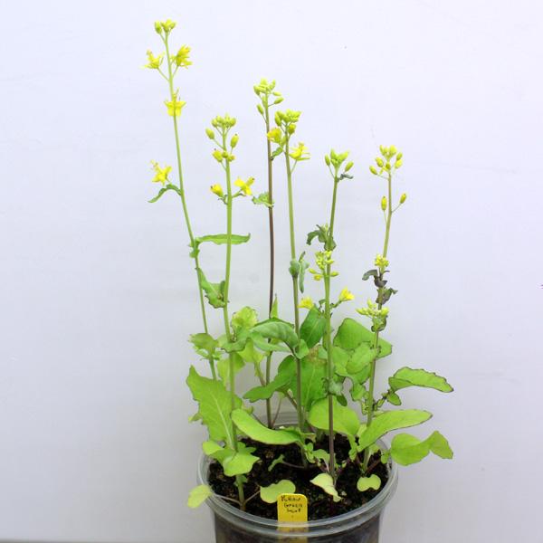yellowgreenleaf5