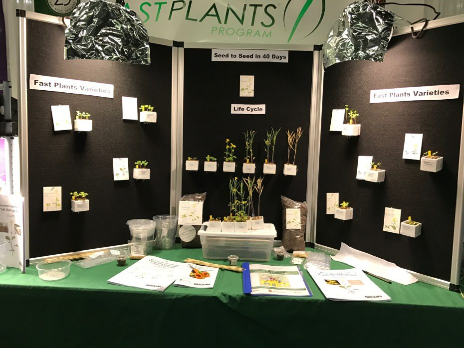Life cycle display from Wisconsin Fast Plants Booth: NSTA 2017
