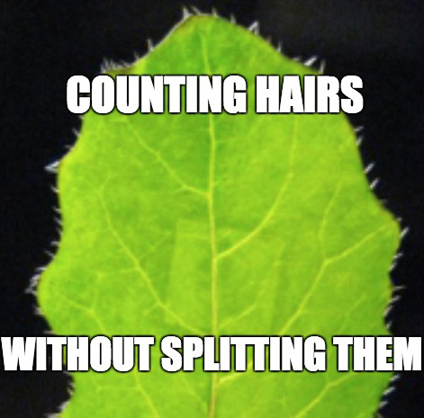 counting-hairs