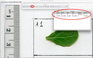 calculating leaf hairs with ImageJ
