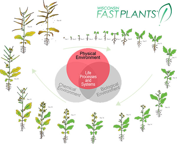 Physical environment factors, along with chemical and biological factors, affect Fast Plants systems and life processes