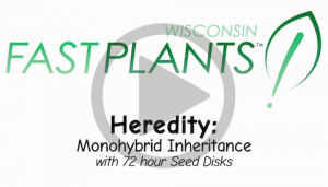 Monohybrid seed disk genetics inheritance life science