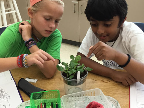 Students thoughtfully observe their Fast Plants.