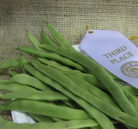 growing-plants-beans