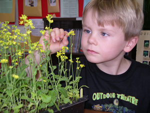 Growing Fast Plants with children inspires learning