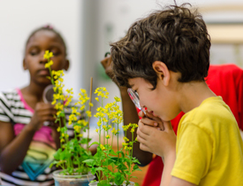 Hands-on learning with Fast Plants grows critical thinking