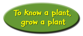 to know a plant grow a plant