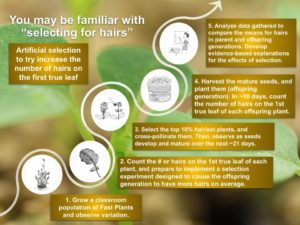 Hair Selection Investigation overview graphic