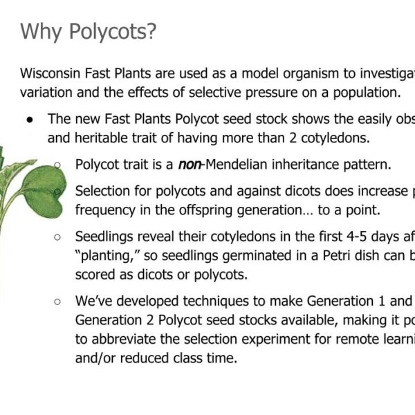 New Polycot seed line is excellent for selection experiments.