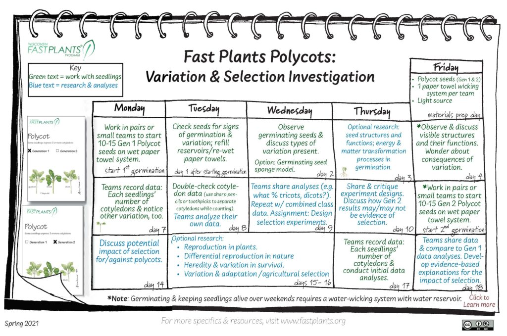 Polycots investigation calendar